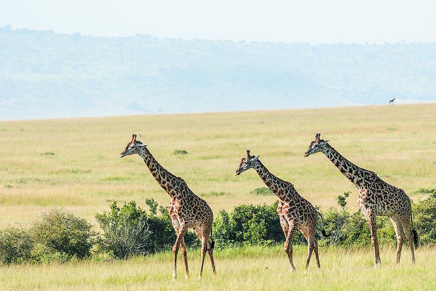 Safari time in Kenya