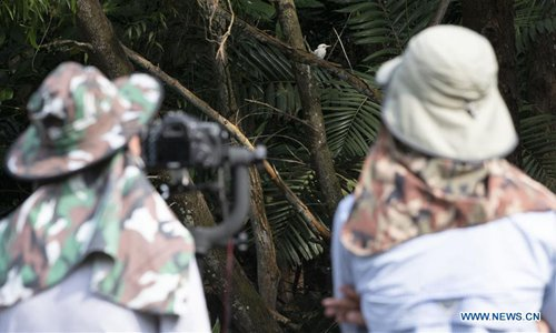 Rare albino white-collared kingfisher spotted in Singapore