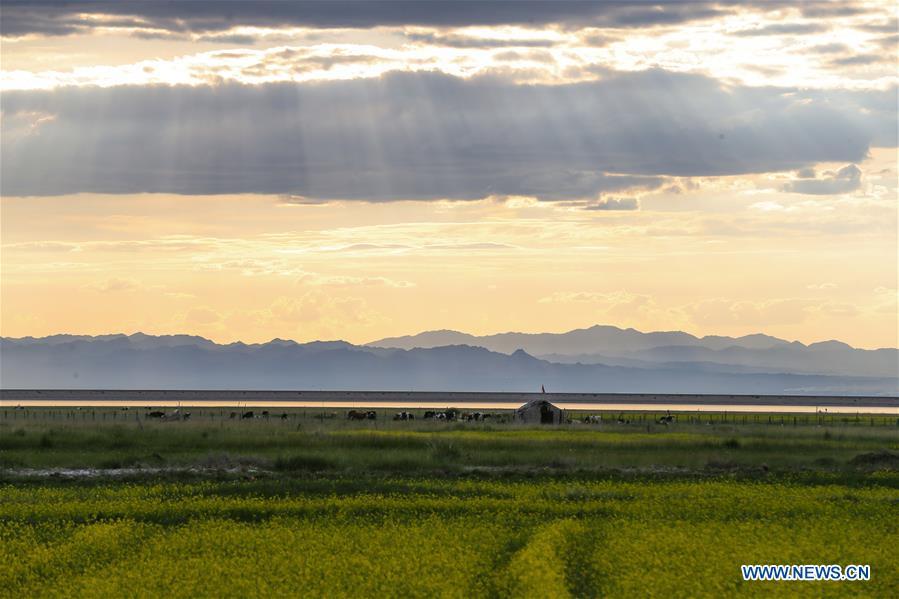 Wetland park in NW China's Xinjiang greets peak of summer tourist season