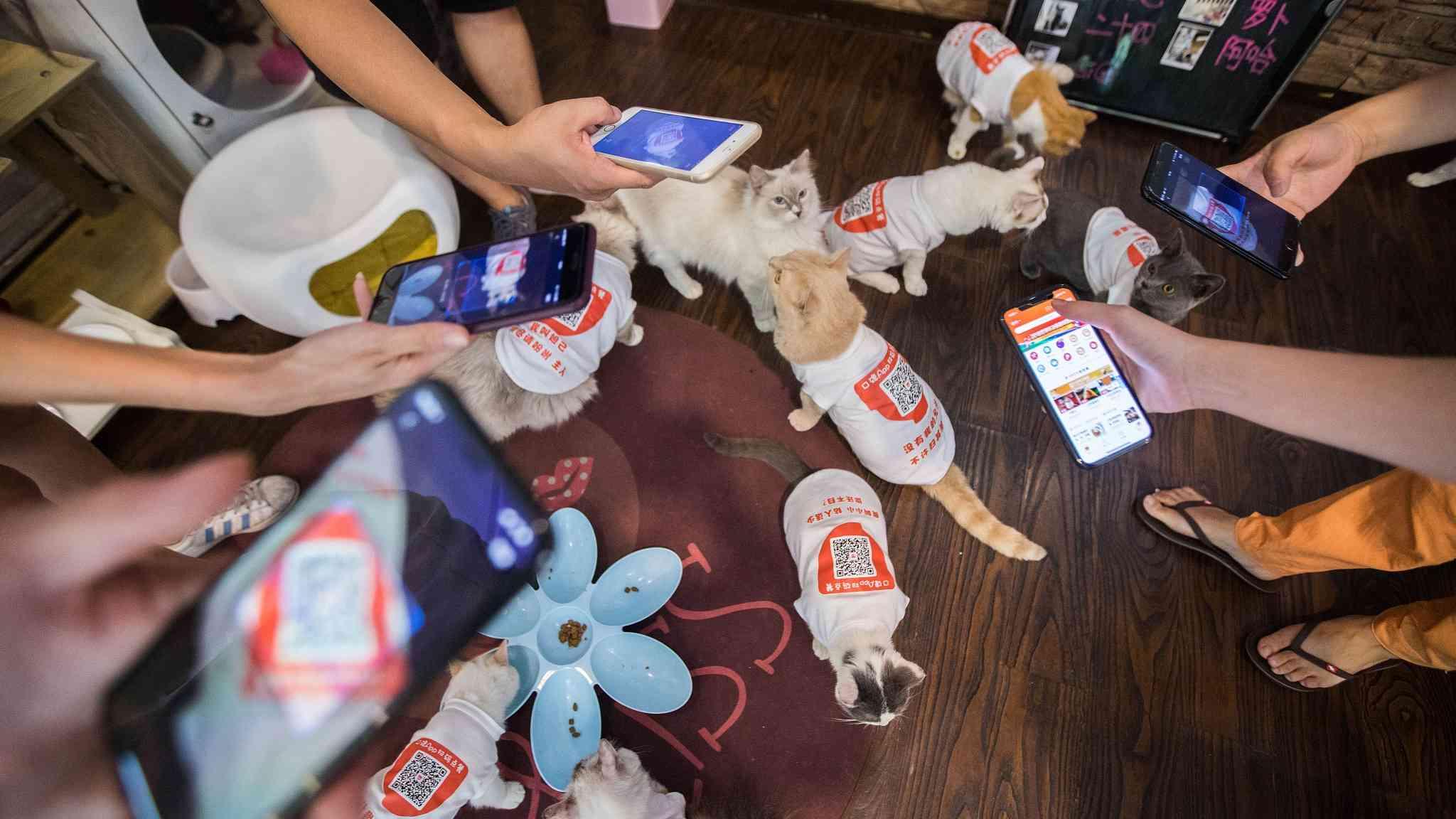 Inside Hangzhou's cashier-free cat café
