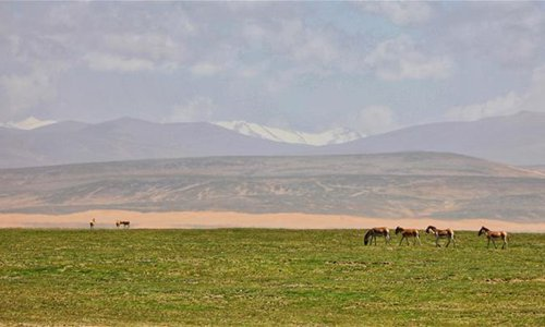 Wildlife seen on Hoh Xil, northwest China's Qinghai Province