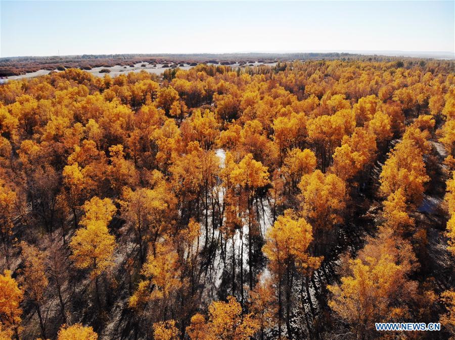 Scenery of Jinta desert forest park