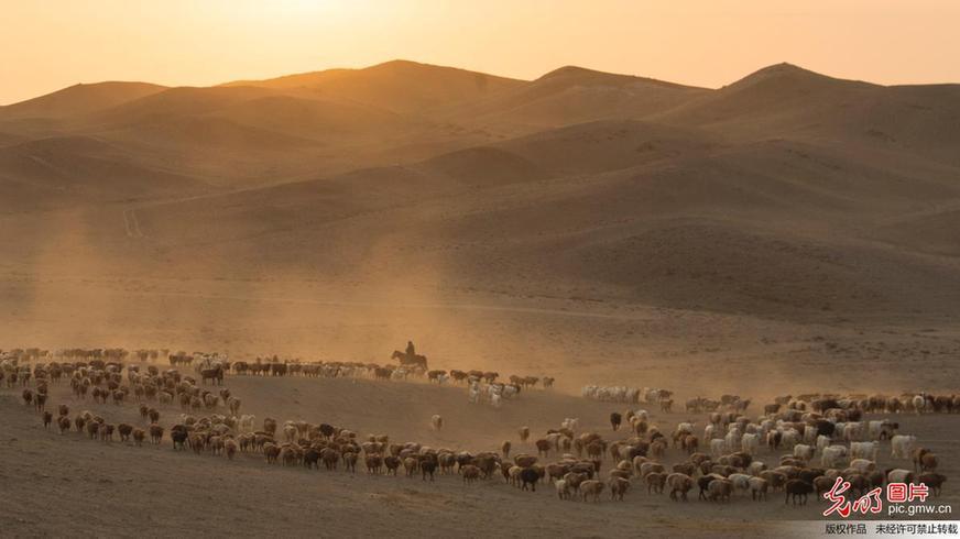 Herdsmen transfer livestock to autumn pasture in NW China's Xinjiang