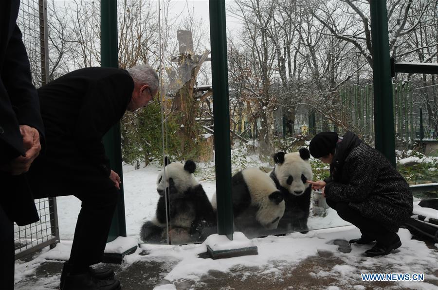Panda twins at Zoo Vienna to return to China