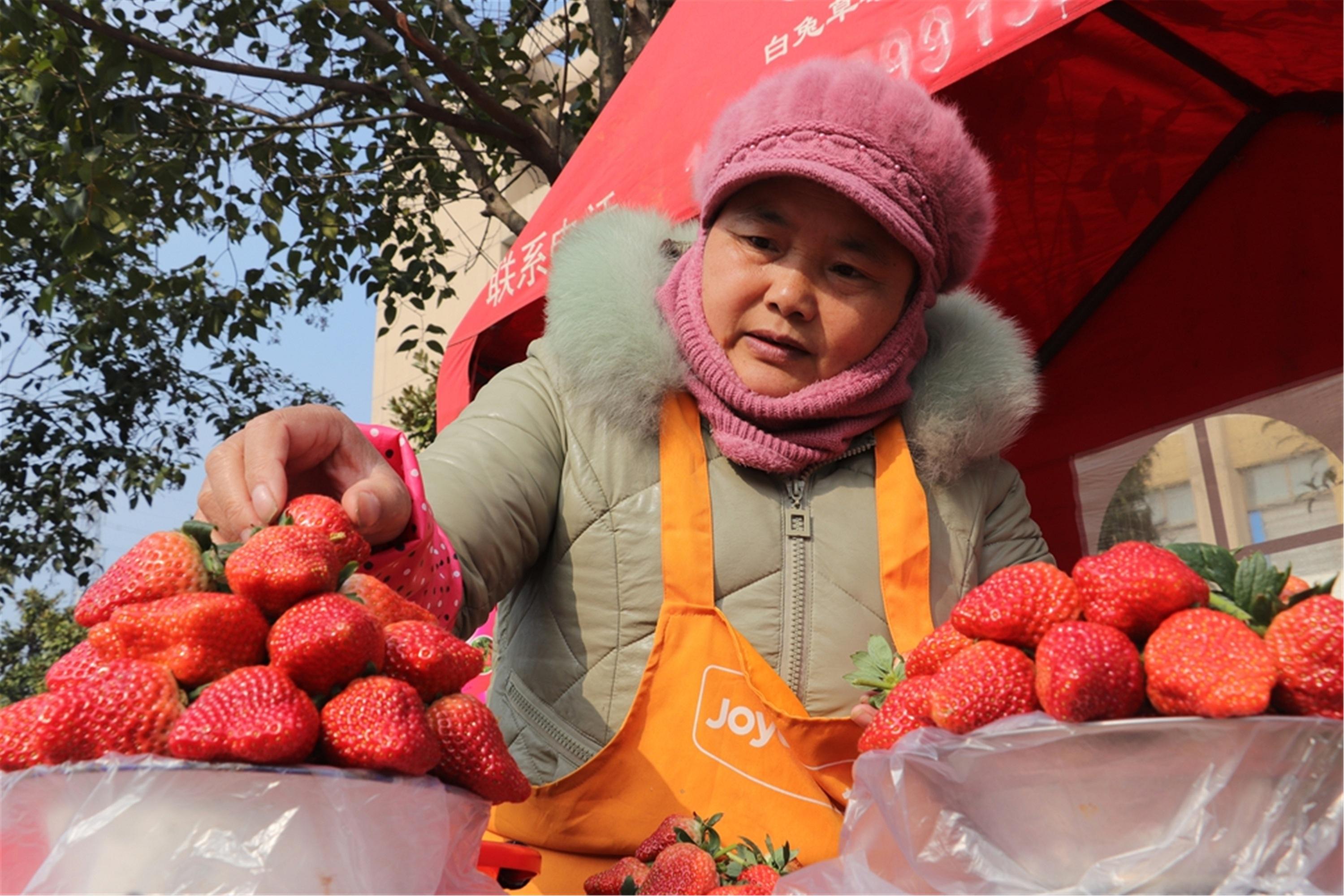 Strawberry brings high profits to Jiangsu farmers