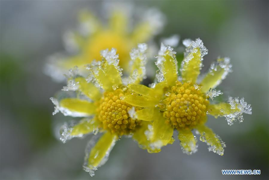 A glimpse of frozen plants in central China's Hubei