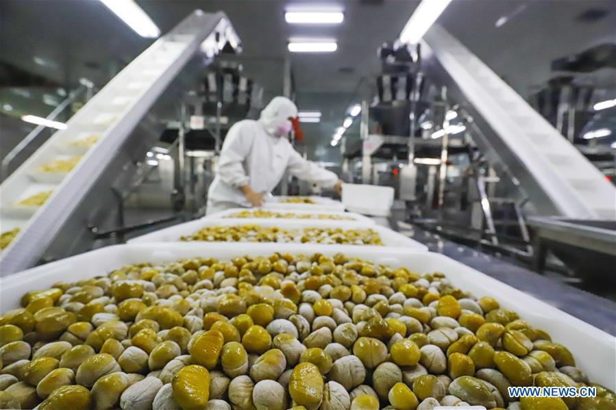In pics: staff work at chestnut processing factory in N China's Hebei