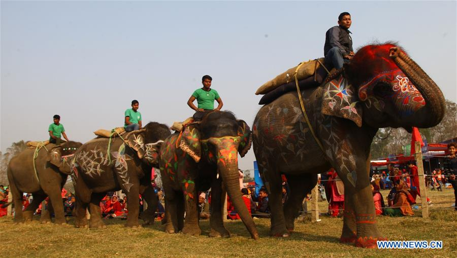 Beauty contest held during 15th Elephant Festival in Sauraha, Nepal