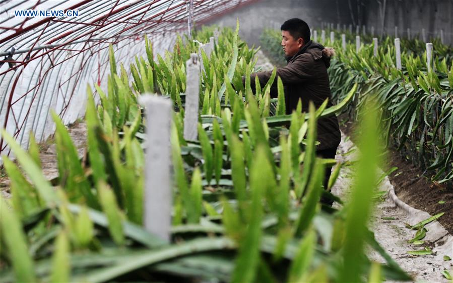 Farmers work in winter across China
