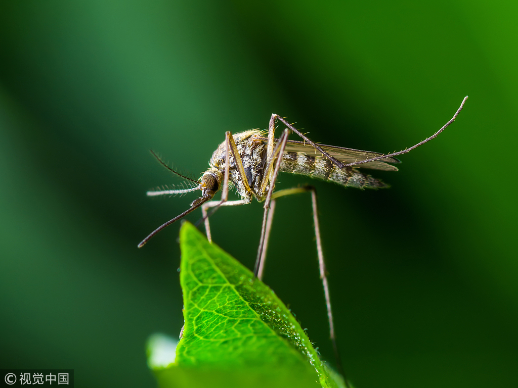 """U.S. scientists have worked out """"hot spot"""" maps of regions in the world that can help health authorities detect potential wildlife hosts of viruses mostly spread by mosquitoes and ticks. [Photo:VCG]"""