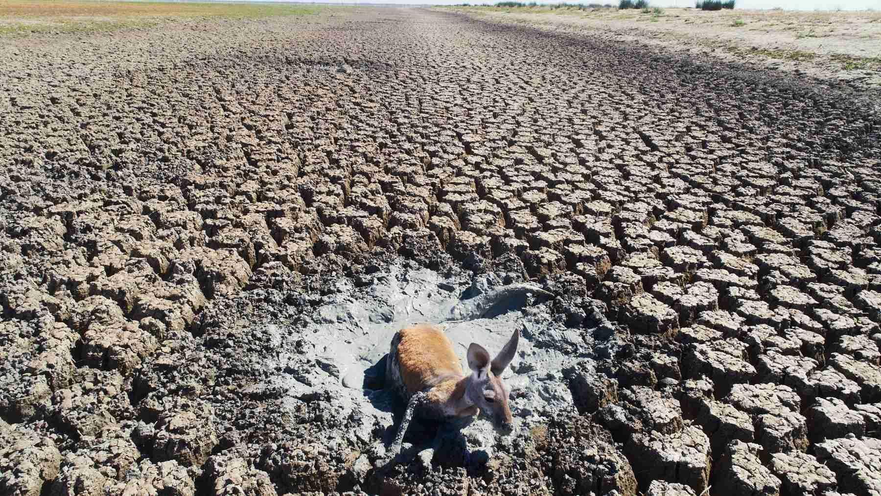 Animals struggle to survive as Australia faces severe environmental crisis