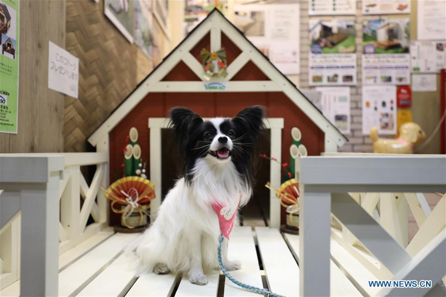 """Pet Haku 2019"" held in Yokohama, Japan"