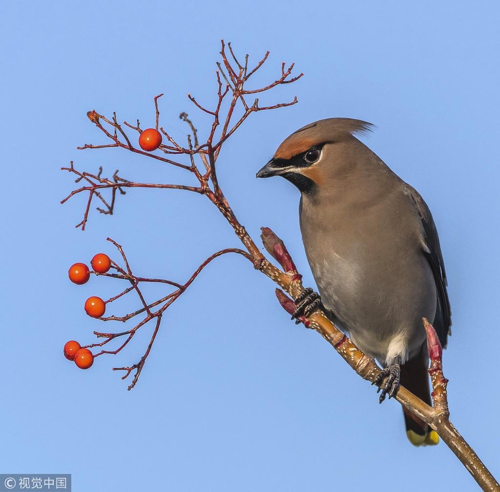 Rare winter bird thrills birdwatchers in UK