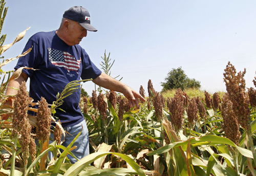 China announces anti-dumping measures on US sorghum
