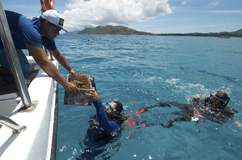 In the Seychelles, coral reefs face climate change threat
