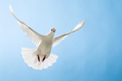 和平.jpg