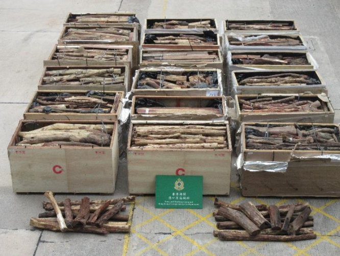 582 arrested in Hong Kong Customs' Lunar New Year anti-smuggling operation
