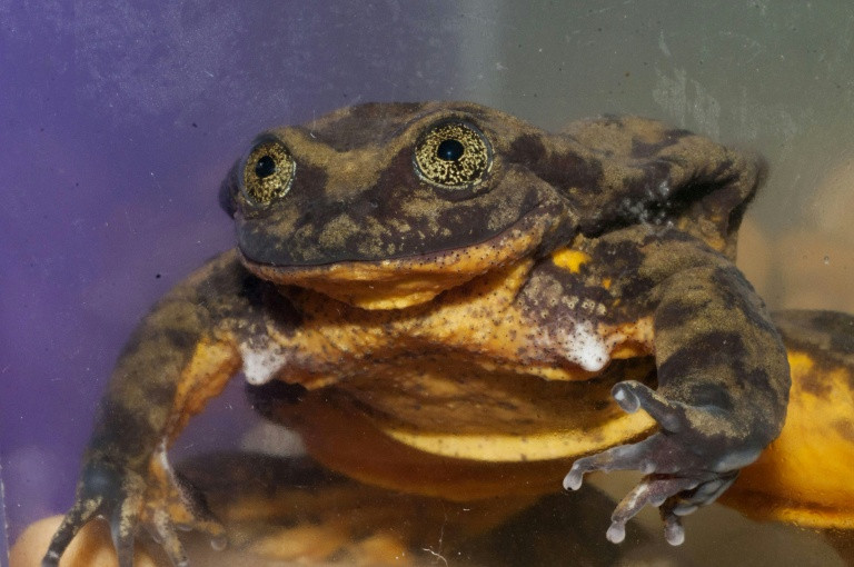 Romeo the lonesome frog is feelin' the love