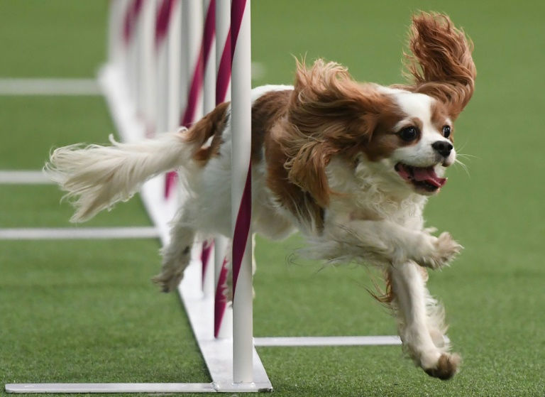 It's dog-eat-dog as canine contest kicks off in New York