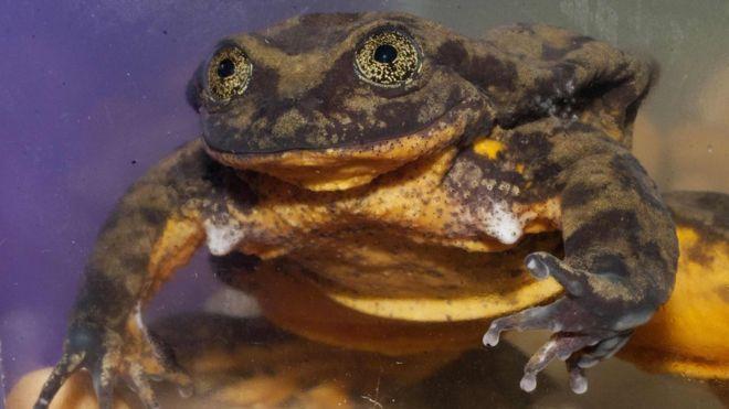 青蛙.jpg
