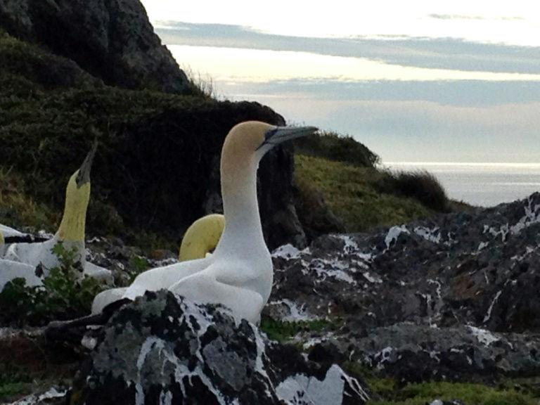 'World's loneliest bird' Nigel dies in New Zealand