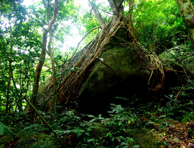 Hainan to build tropical rainforest national park