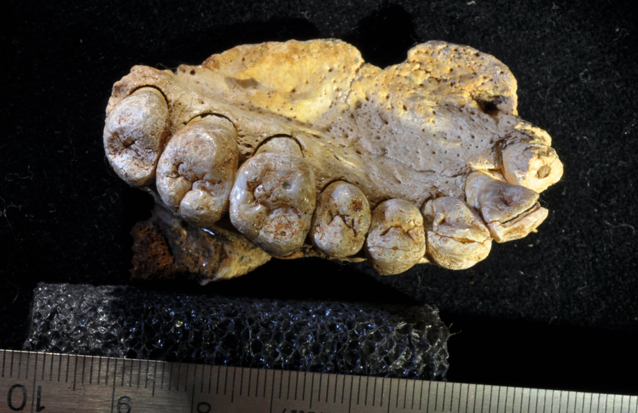 Archeologists in Israel dig up oldest human fossil outside of Africa