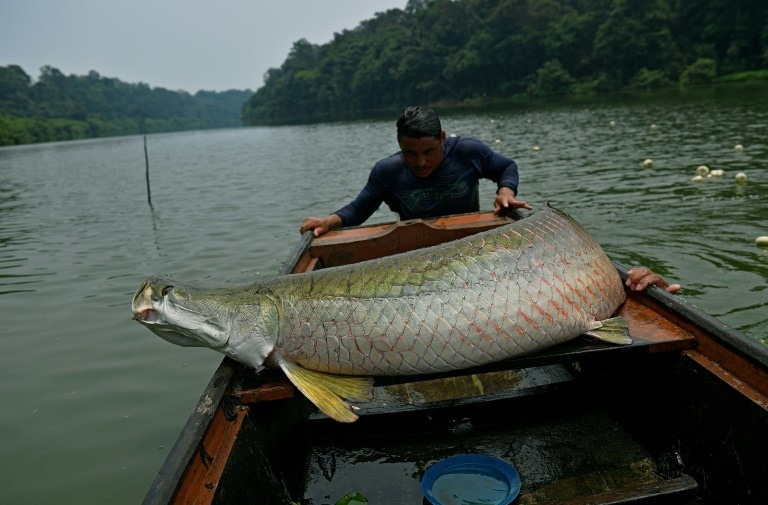 Brazil to suspend fish exports to EU