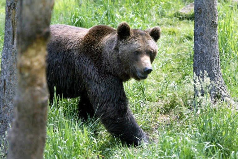 French farmers furious over plans to release bears