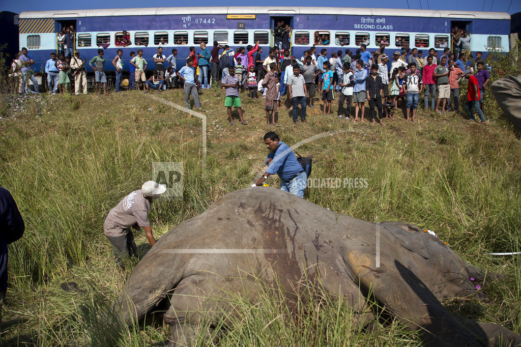 India passenger train hits and kills 2 Asian elephants