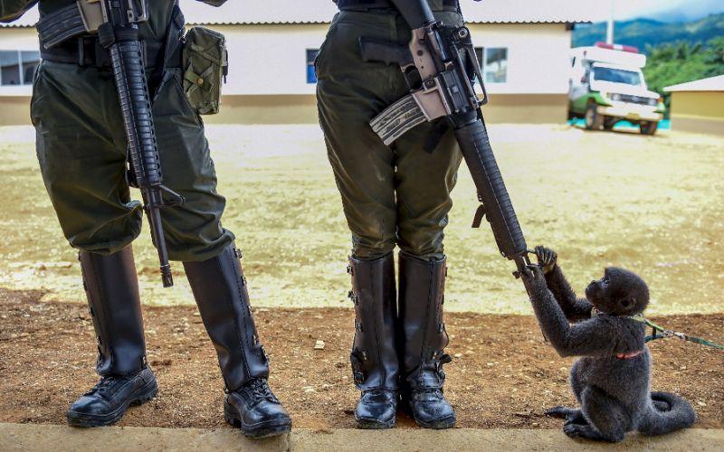 EU removes Colombia's FARC from terror blacklist