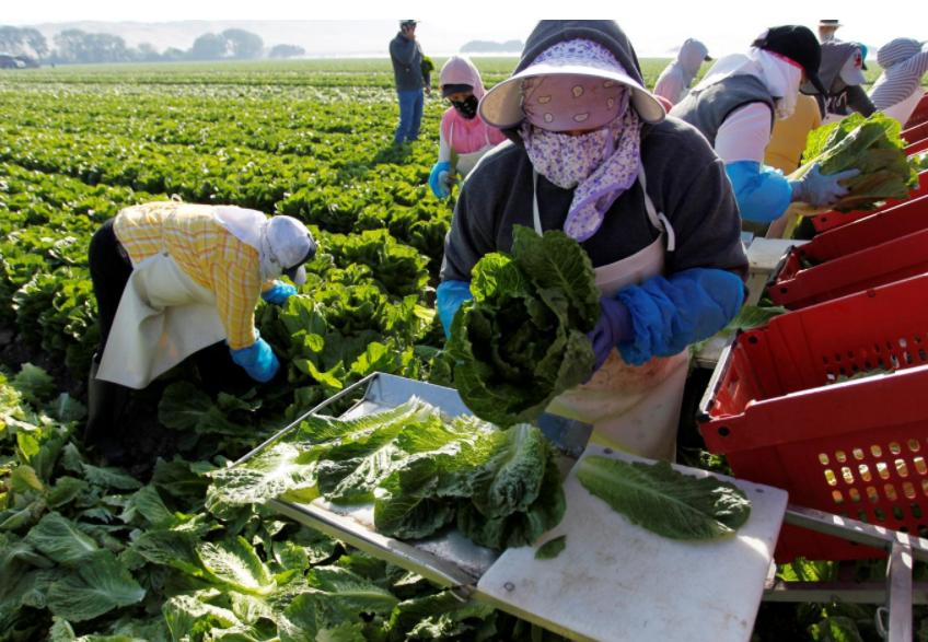 As Trump targets immigrants, U.S. farm sector looks to automate