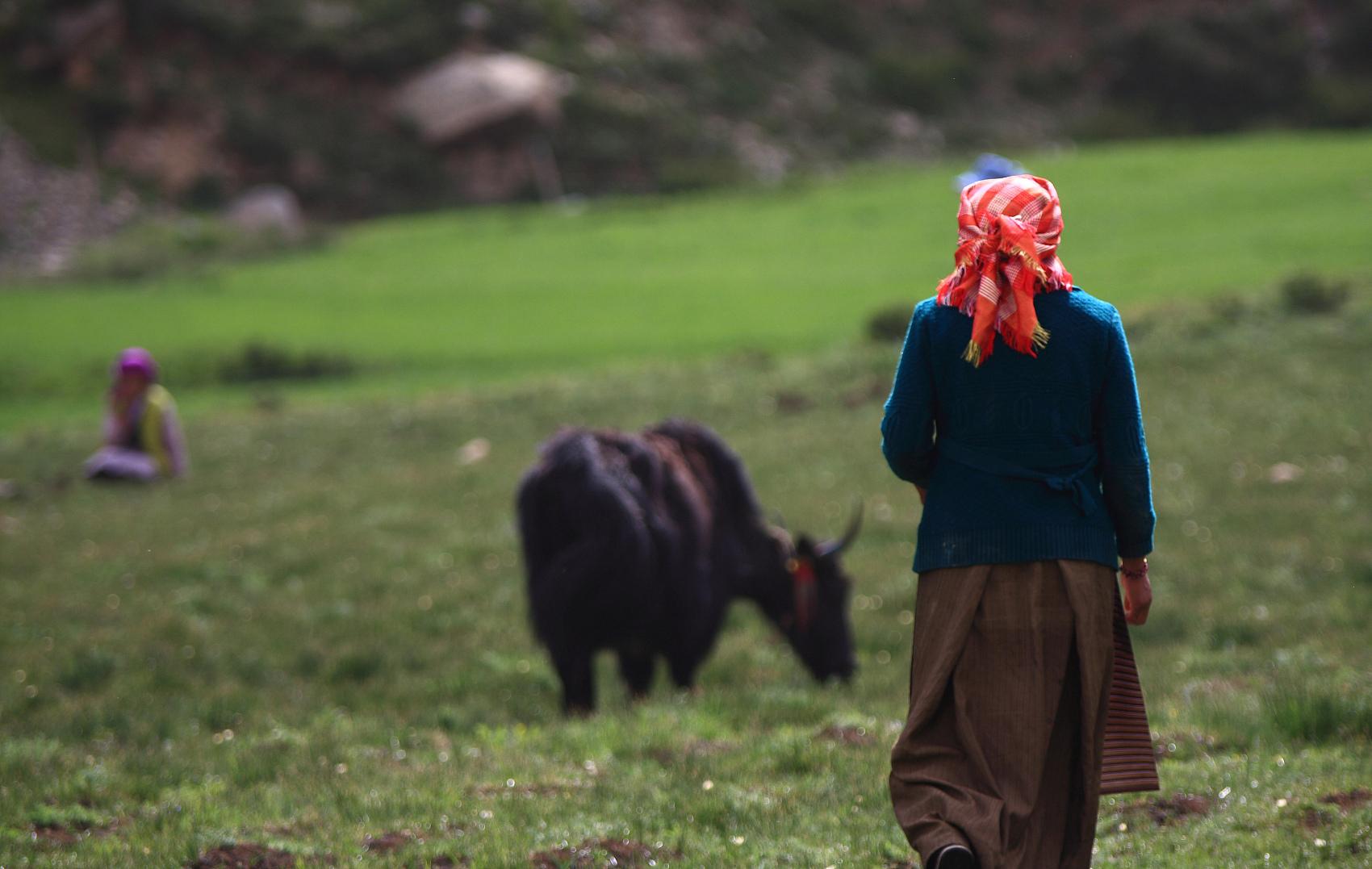 西藏牧民.jpg