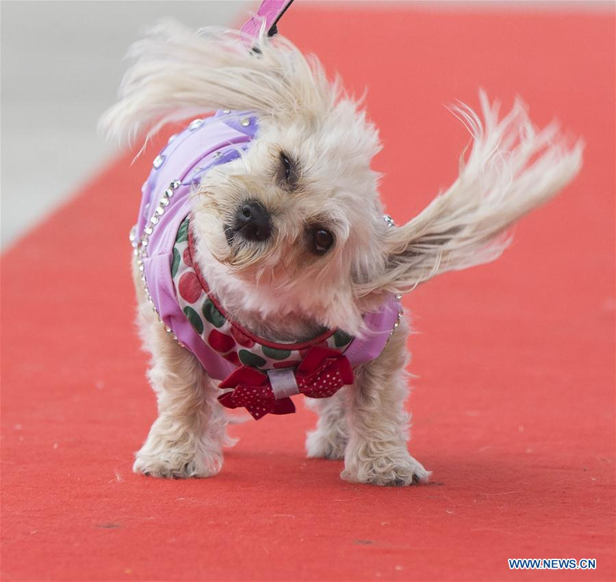 In pics: fashion show of 2018 Woofstock in Toronto, Canada