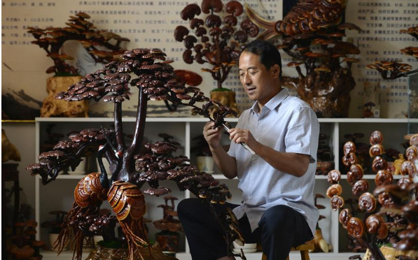 Farmers plant reishi mushroom to improve incomes in China's Hebei