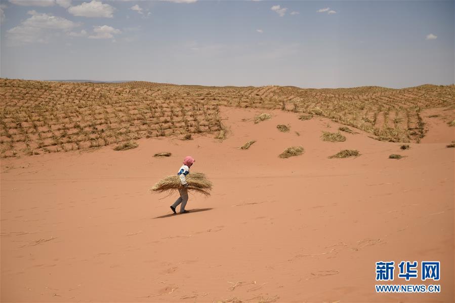 China's wisdom in taming desertification