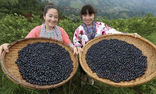 Villagers plant blueberry to get rid of poverty in south China