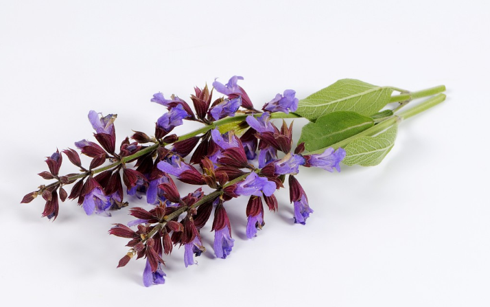Chinese scientists complete genome sequencing of tropical sage plant