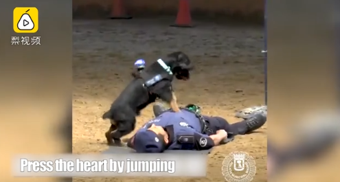 The video of a police dog doing CPR goes viral