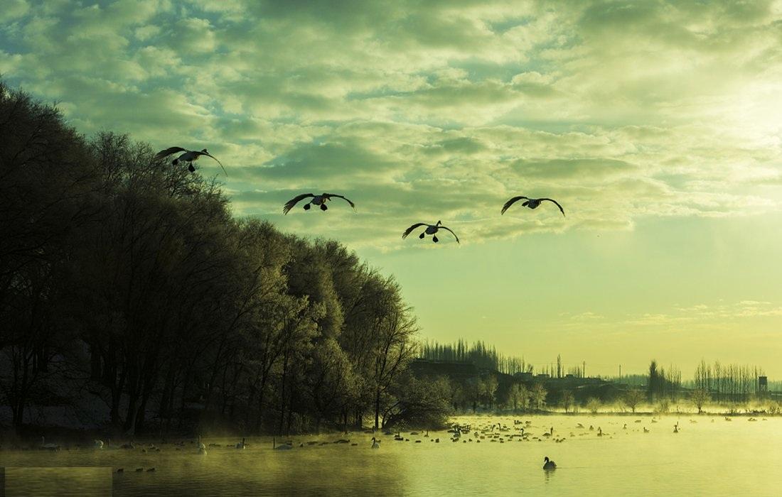 A swan fairyland in Xinjiang