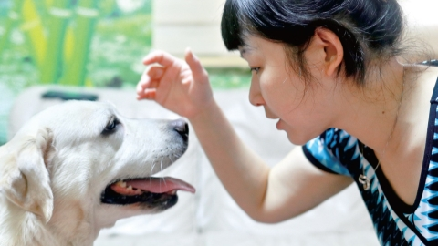 Guiding eyes for visually impaired