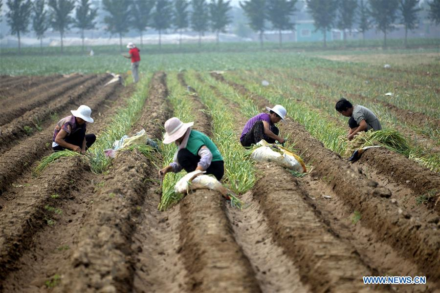 In pics: summer farm work across China
