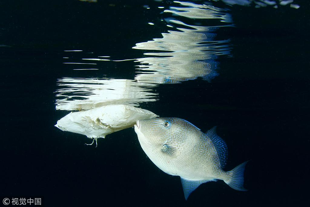 Microplastics found in organisms 4,500 meters under the ocean
