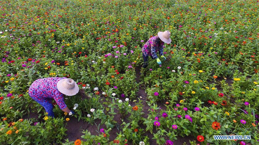 Farmers work across China on Dashu, hottest day of summer