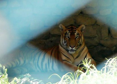 Int'l Tiger Day marked in Kathmandu, Nepal