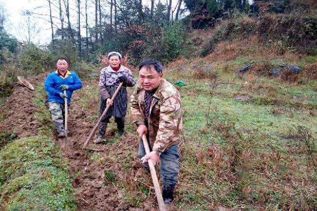 Veteran's tea plantation alleviates poverty in Guizhou region