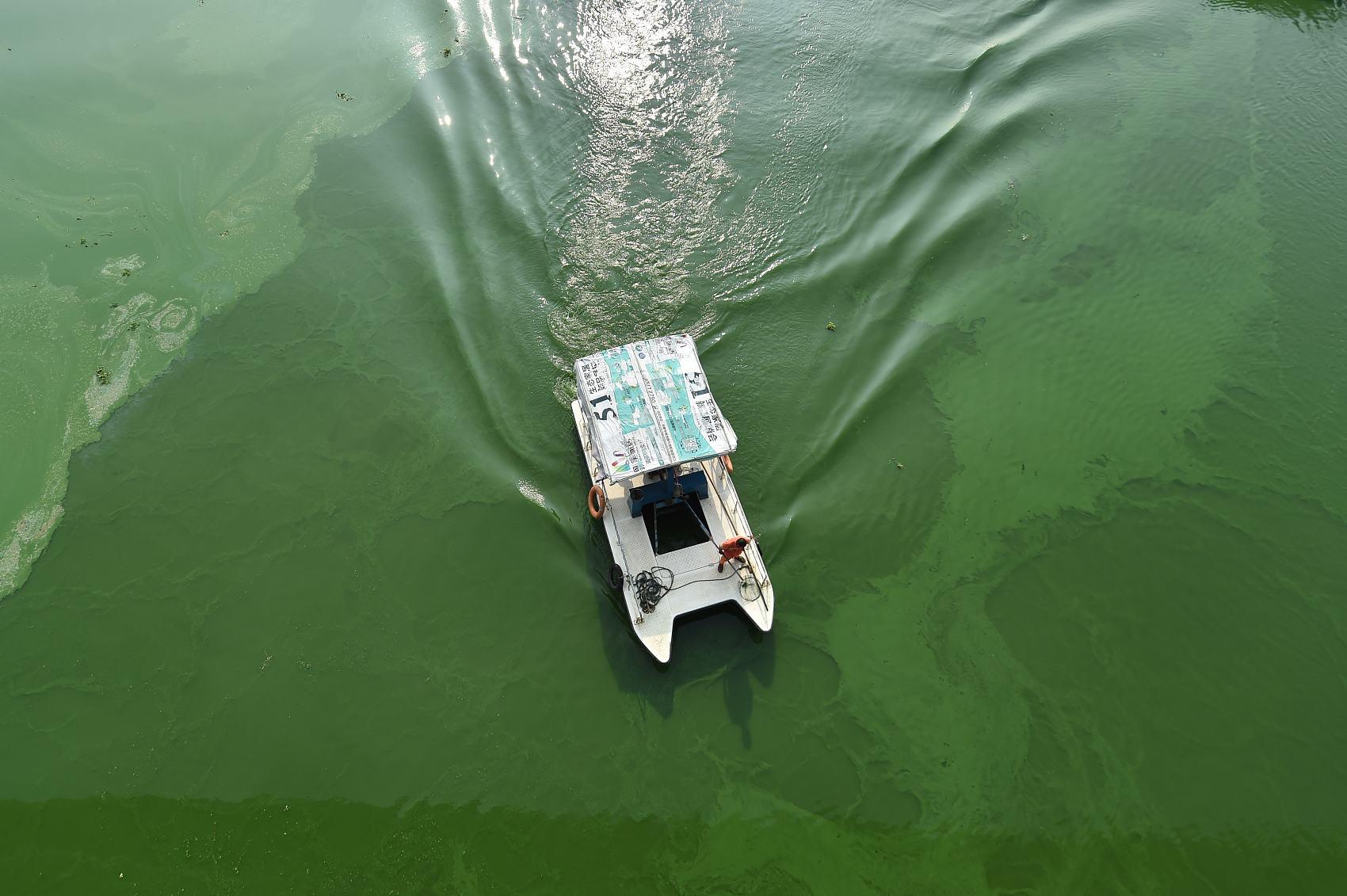 Raging blue algae seen in Hefei
