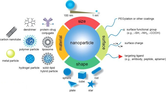 Australian, Chinese scientists use nanoparticles to detect deep-tissue cancers