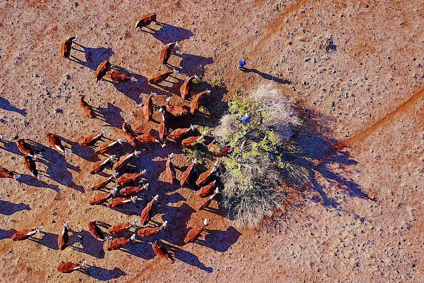 """Aussie farmers in """"survival mode"""" amid worst drought in decades"""