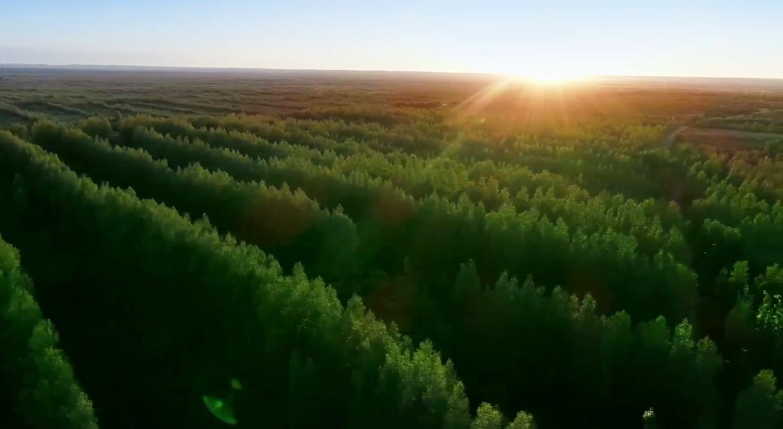 Kubuqi Desert: an afforestation miracle